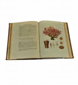 Donati Korallen Adria 1758