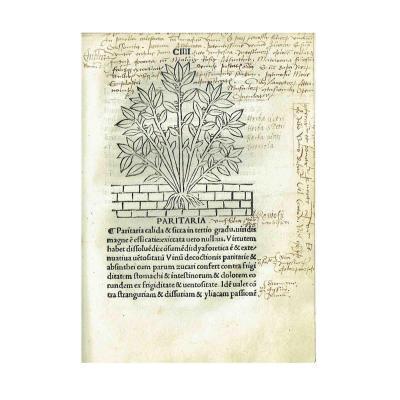 Tractatus Herobolarium 1499