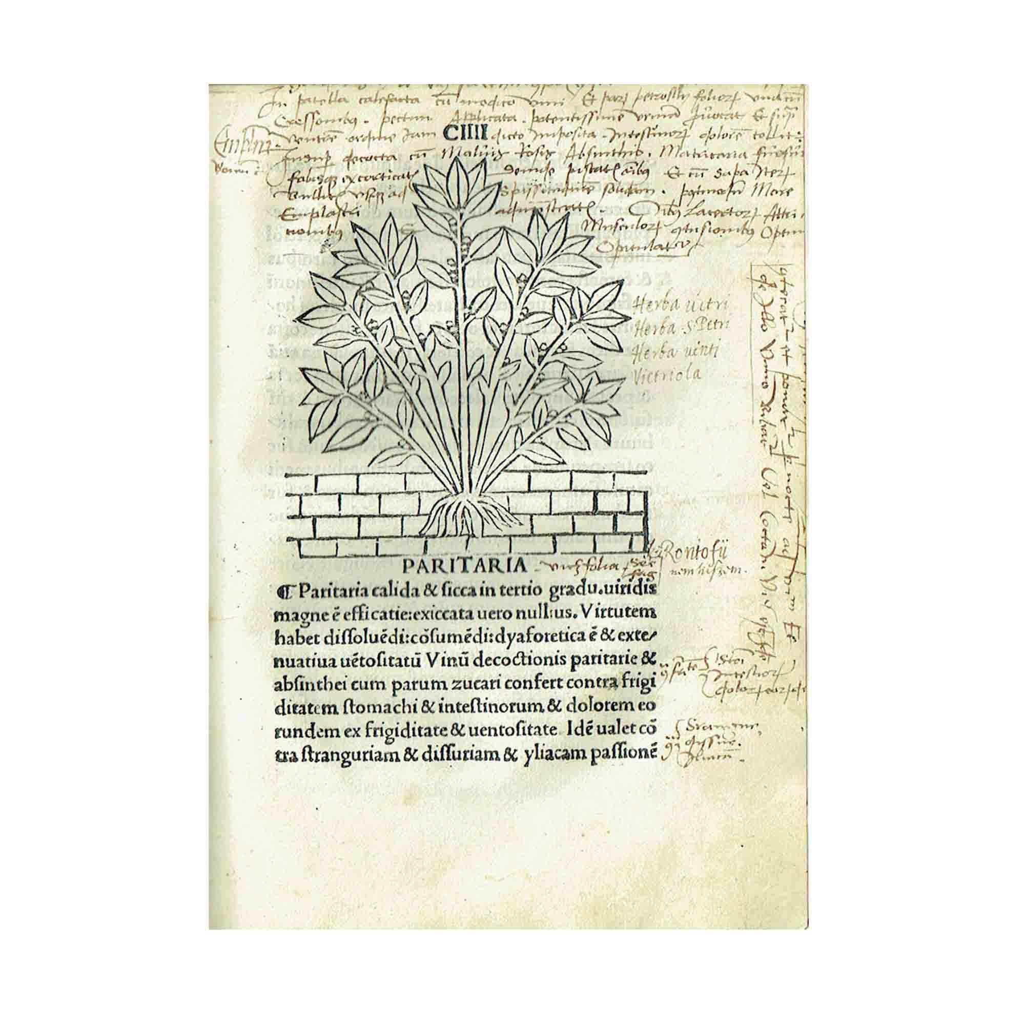 Tractatus Herobolarium 1499 2 N