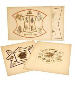 Herbarium Algen Adria 1887