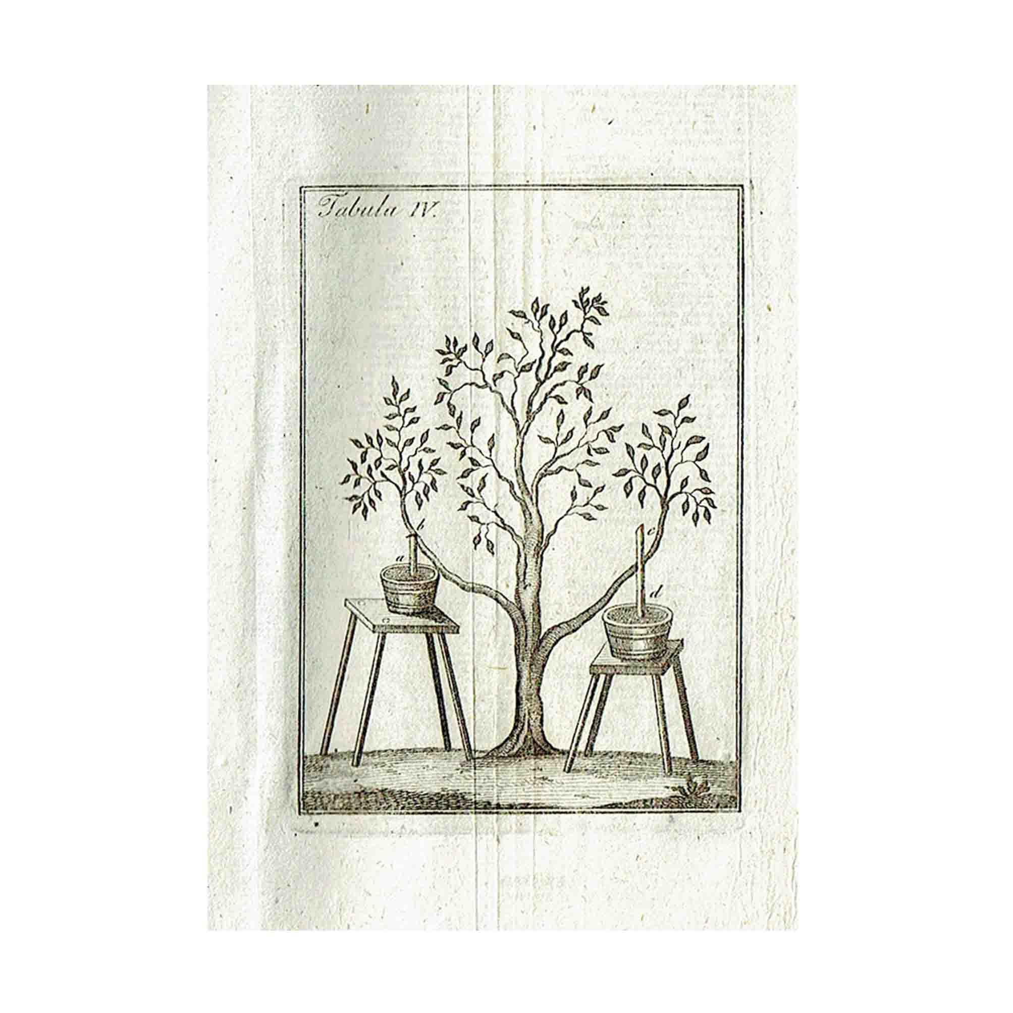 5948-Schmidt-Obstbaumgaertner-1827-Illustration-A-N.jpg
