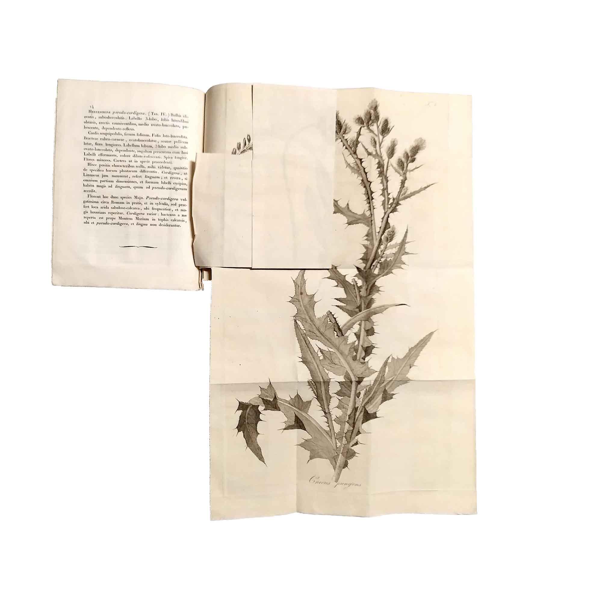 5971-Sebastiani-Romanarum-Plantarum-1815-Titelblatt-Kolosseum-Illustration-1-frei-N.jpg